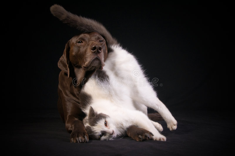 Animal Best Friends stock photography