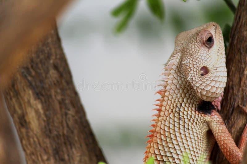 Animal, Blur, Chameleon stock image