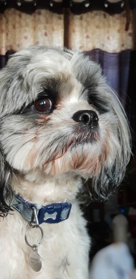 Animal bonito do cão fotografia de stock royalty free