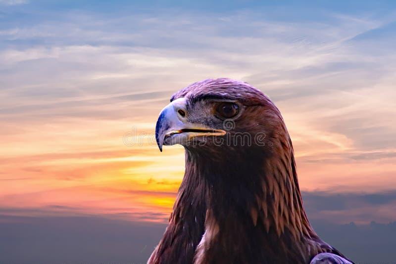 Animal, calvo, Eagle imagenes de archivo