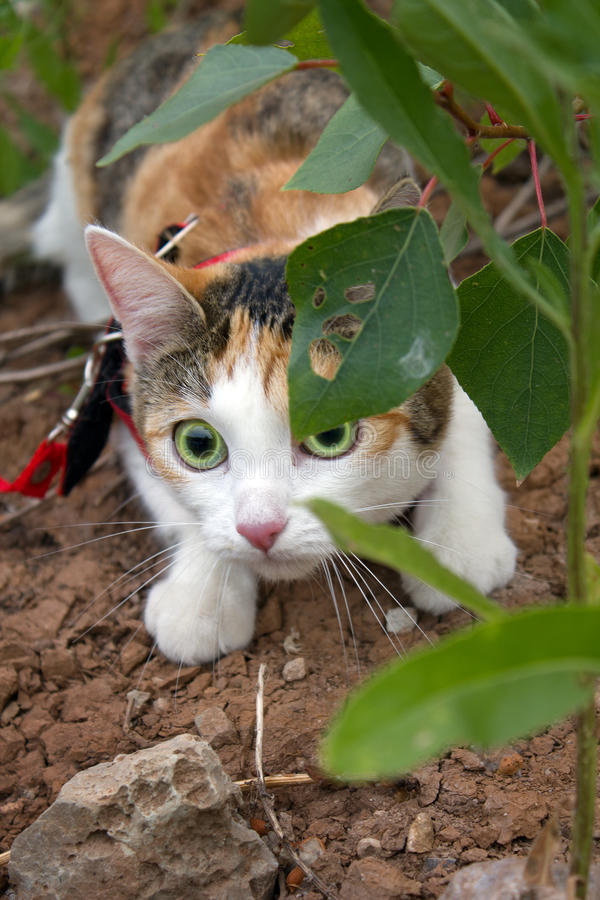 Download Animal  cat stock image. Image of wool, mineral, leaves - 15385101