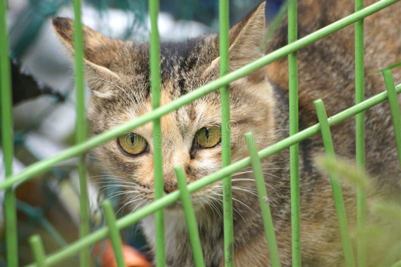 Animal. Cat royalty free stock photo