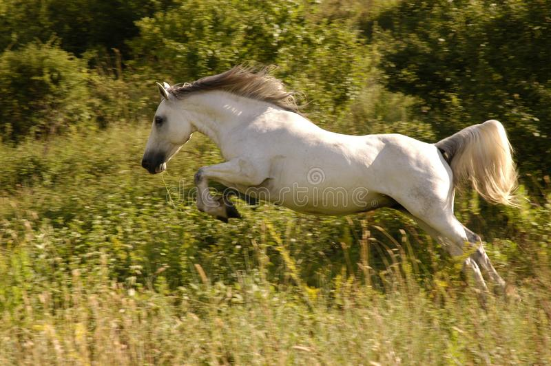Animal, Cavalry, Countryside stock photography