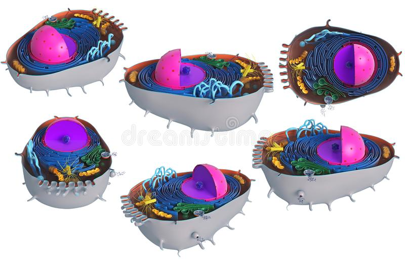 Animal cell in section, multi-colored, set. Animal cell in section, multi-colored science biology, set. 3D rendering stock illustration