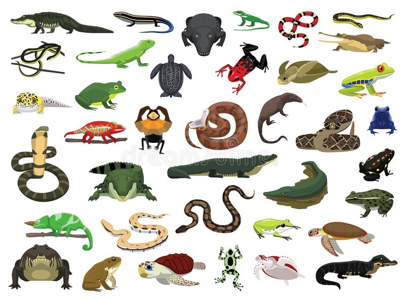 Various Reptile and Amphibian Vector Illustration. Animal Character EPS10 File Format stock illustration