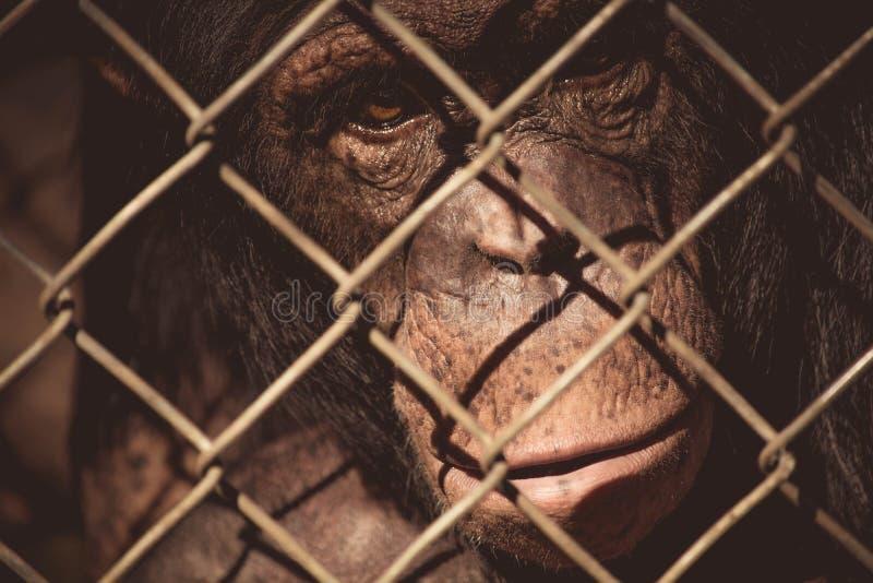 Animal, Close-up, Monkey stock photos