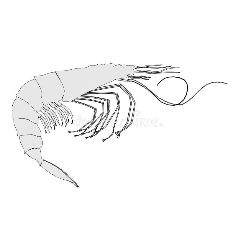 Animal crustáceo - camarón libre illustration