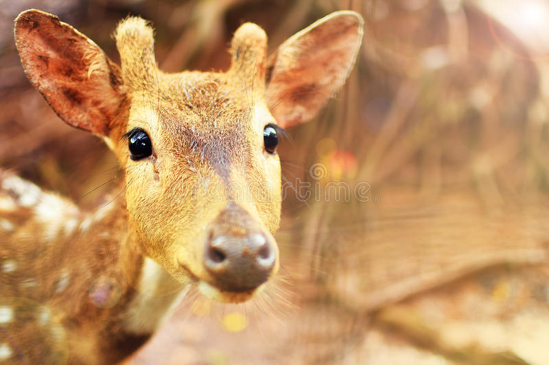 Animal cute deer (family Cervidae) close up with zoo background stock image