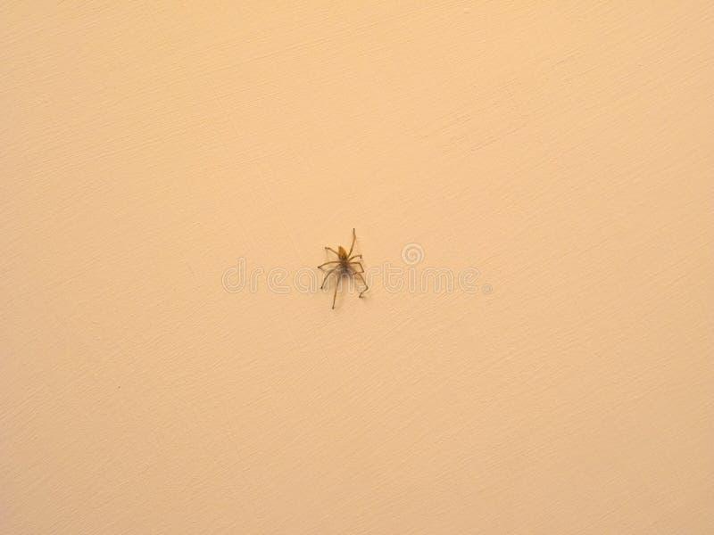 animal da aranha de artrópodes do filo (artrópode fotos de stock royalty free