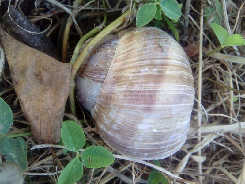 Animal da grama verde do shell do caracol fotografia de stock royalty free