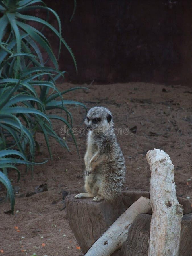 Animal dans l'Australie de zoo de Perth images stock