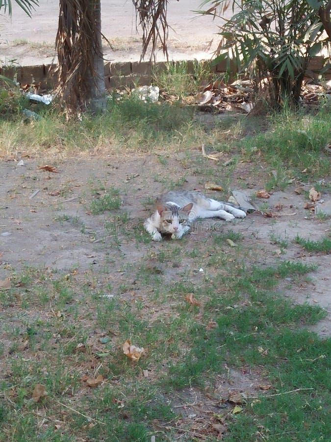 ANIMAL DE CAT, DURÉE 2 À 6 ANS photographie stock