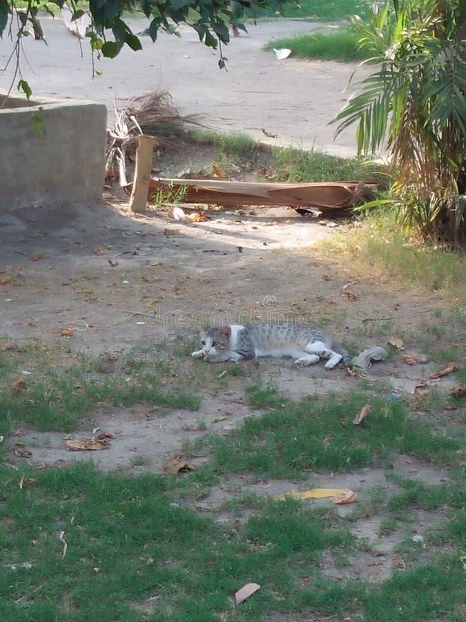 ANIMAL DE CAT, DURÉE 2 À 6 ANS photos libres de droits