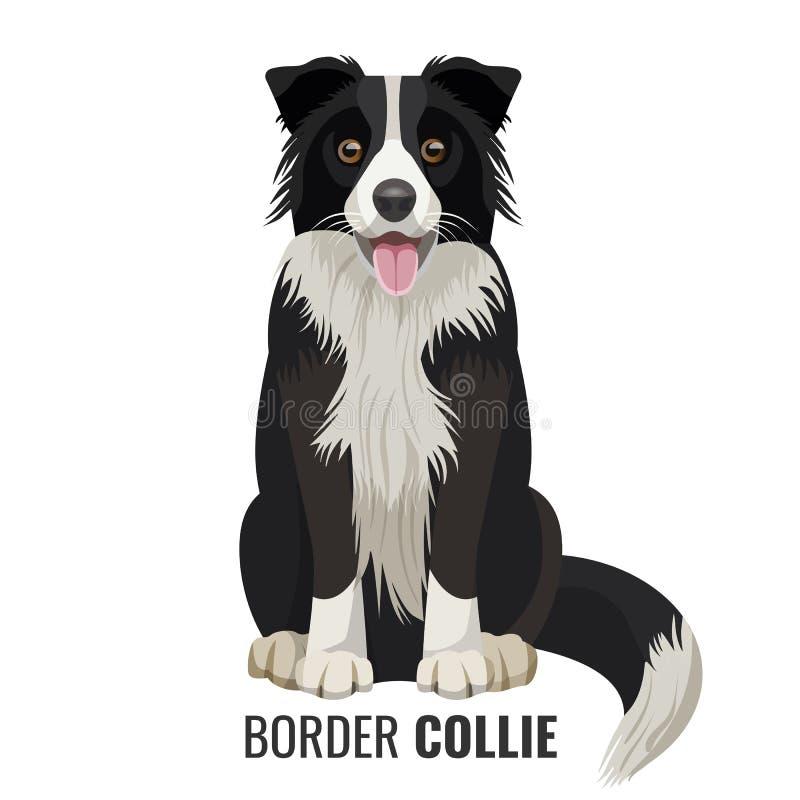 Animal de estimação de border collie isolado na ilustração branca do vetor ilustração do vetor