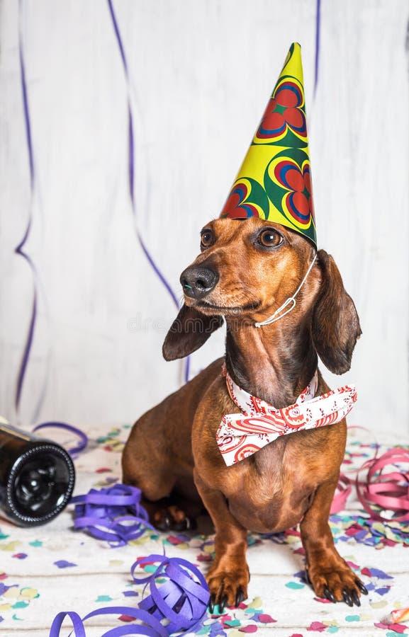 Animal de estimação no chapéu e no laço do partido que sentam-se em confetes imagem de stock