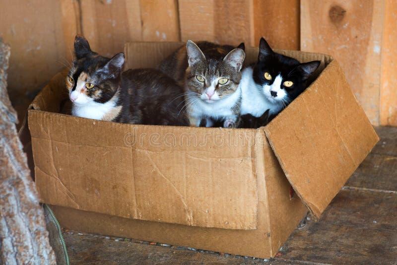 Animal de estimação orfandade do abrigo animal fotos de stock royalty free