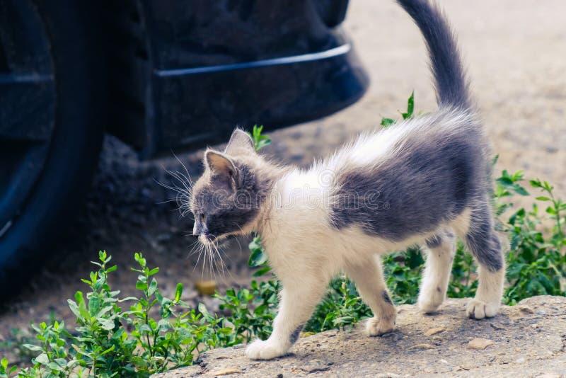 Animal de estima??o bonito da est?tica do gato do gatinho bonito adorável foto de stock