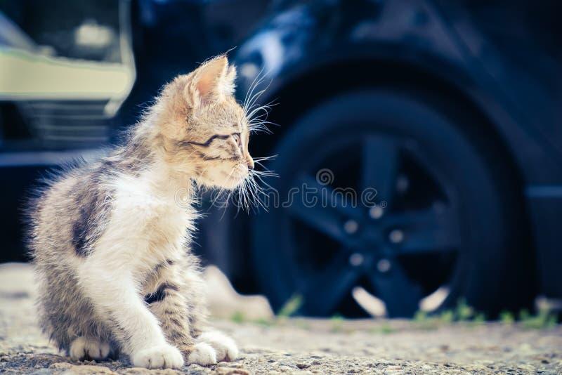 Animal de estima??o bonito da est?tica do gato do gatinho E imagem de stock royalty free
