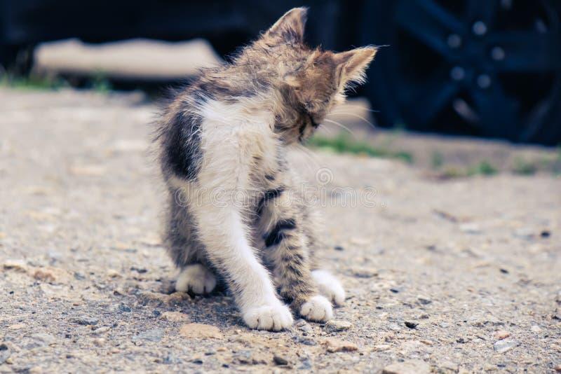 Animal de estima??o bonito da est?tica do gato do gatinho parte externa doméstica foto de stock royalty free