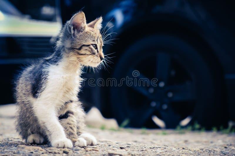Animal de estima??o bonito da est?tica do gato do gatinho sozinho doméstico fotografia de stock