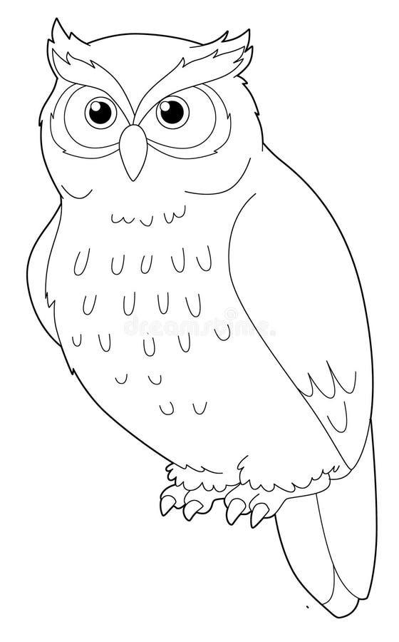 Animal de la historieta - búho - aislado - página del colorante libre illustration