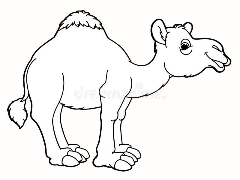 Animal de la historieta - camello - caricatura stock de ilustración