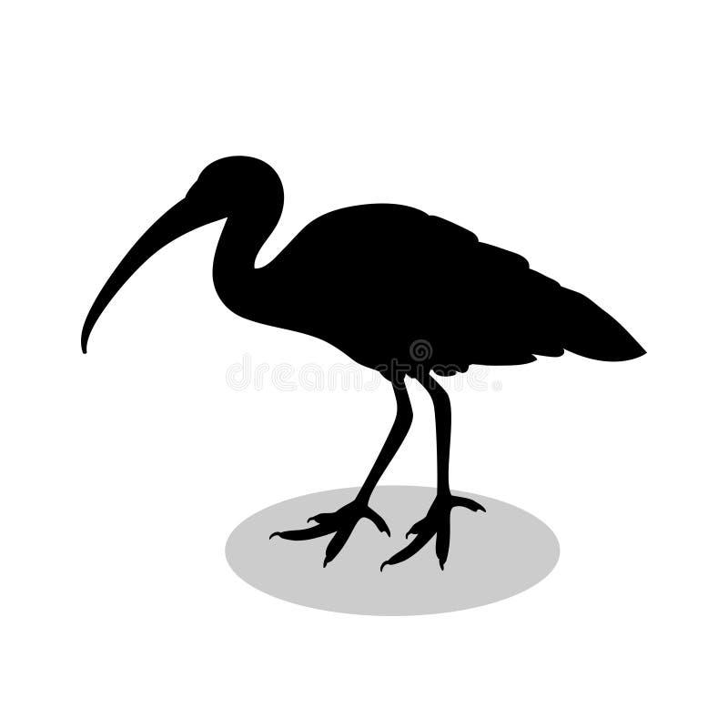 Animal de silhouette de noir d'oiseau d'IBIS illustration libre de droits
