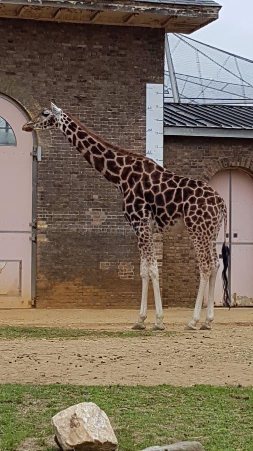 Animal de zoo de Londres images libres de droits