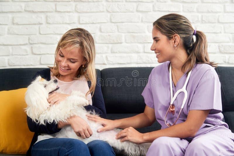 Animal del doctor Dog Owner And de House Call With del veterinario fotografía de archivo