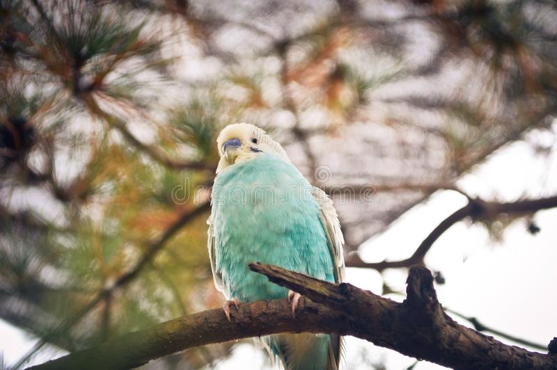 Animal del pájaro foto de archivo libre de regalías