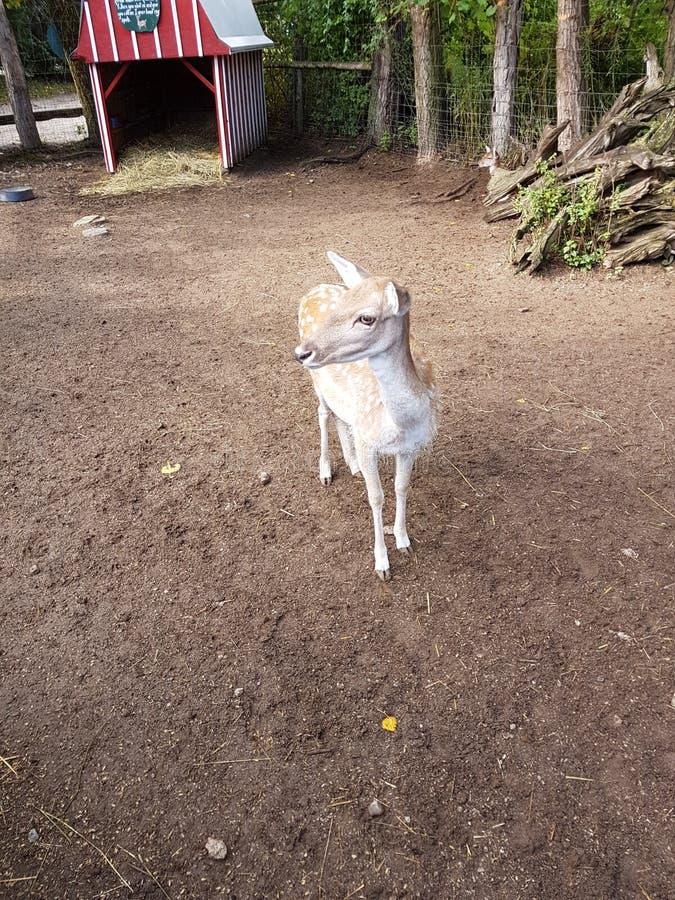 Animal del parque zoológico imagenes de archivo