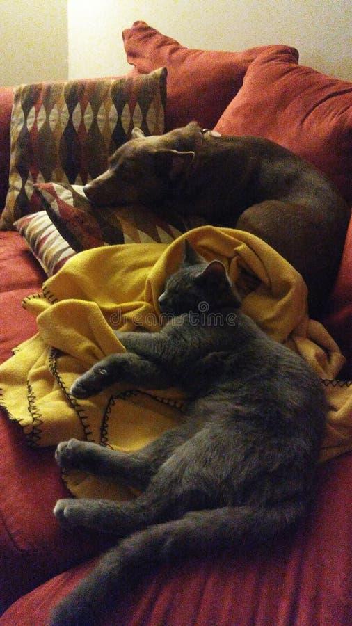 Animal del perro de Kitty fotos de archivo