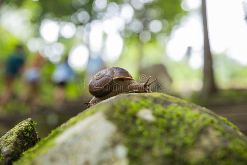 Animal do caracol de lentamente foto de stock royalty free