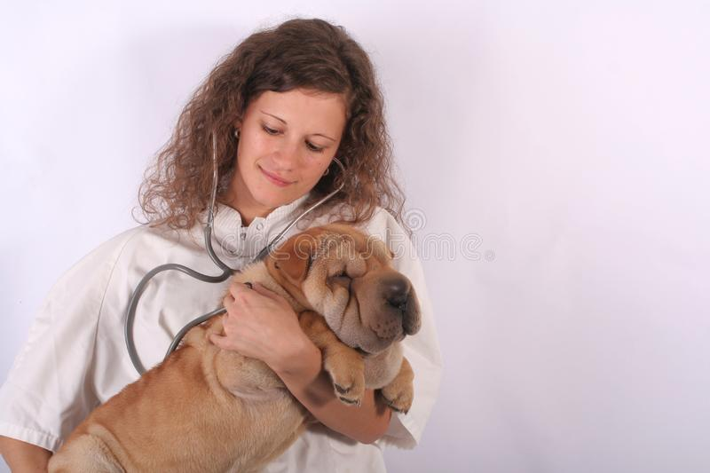 Animal doctor 6 royalty free stock photography