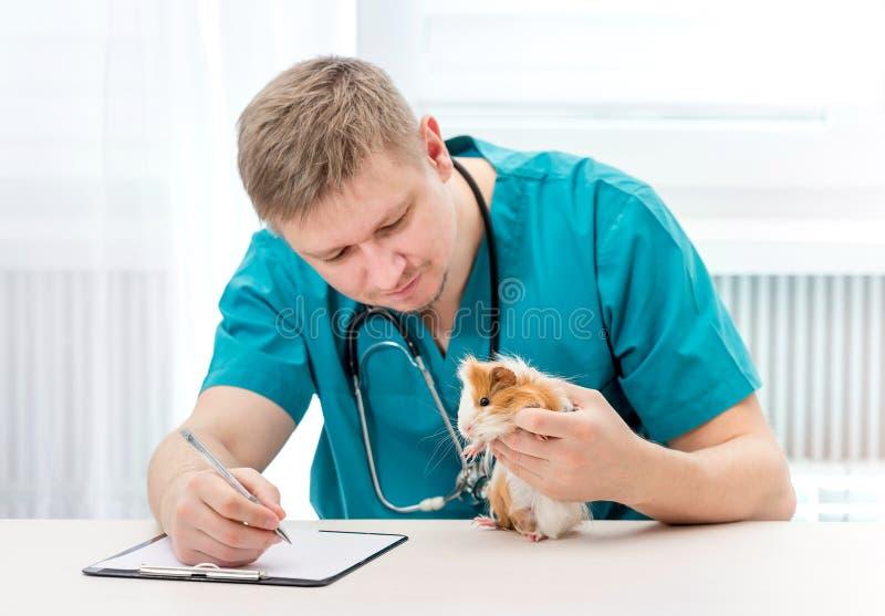 Animal doméstico del doctor veterinario y notas de examen de la fabricación imágenes de archivo libres de regalías