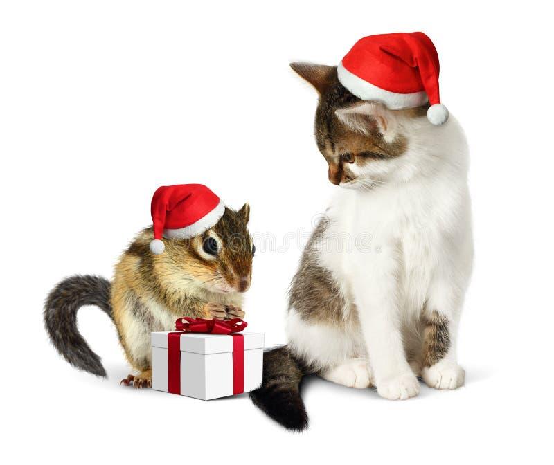 Animal doméstico divertido de la Navidad, ardilla divertida y gato con el sombrero de santa y g fotos de archivo libres de regalías