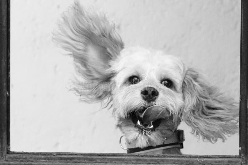 Animal doméstico feliz imagenes de archivo