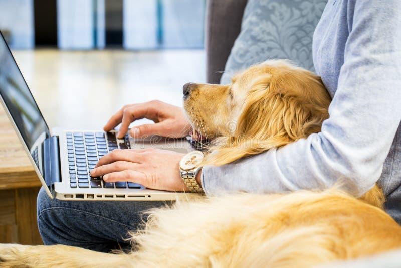 Animal doméstico que pone en el revestimiento del dueño que está mecanografiando en el ordenador portátil imagen de archivo