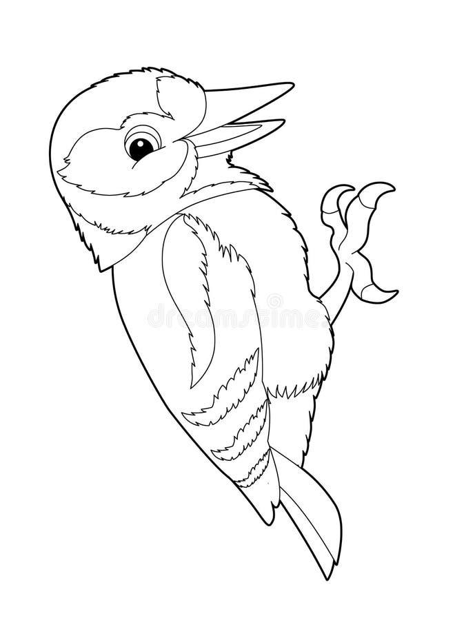 Animal Dos Desenhos Animados Pica Pau Pagina Da Coloracao