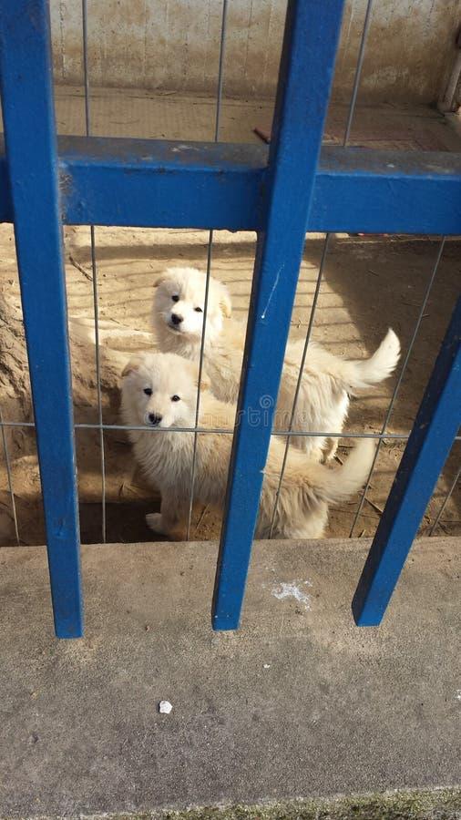 Animal doux photos libres de droits