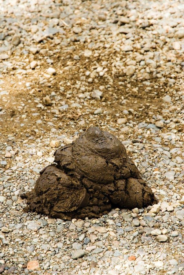 Animal Dung. Fresh Animal Dung on a Sand stock photo