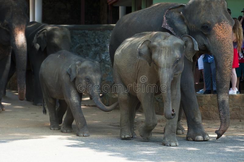 Animal, Elephant, Elephants stock photo