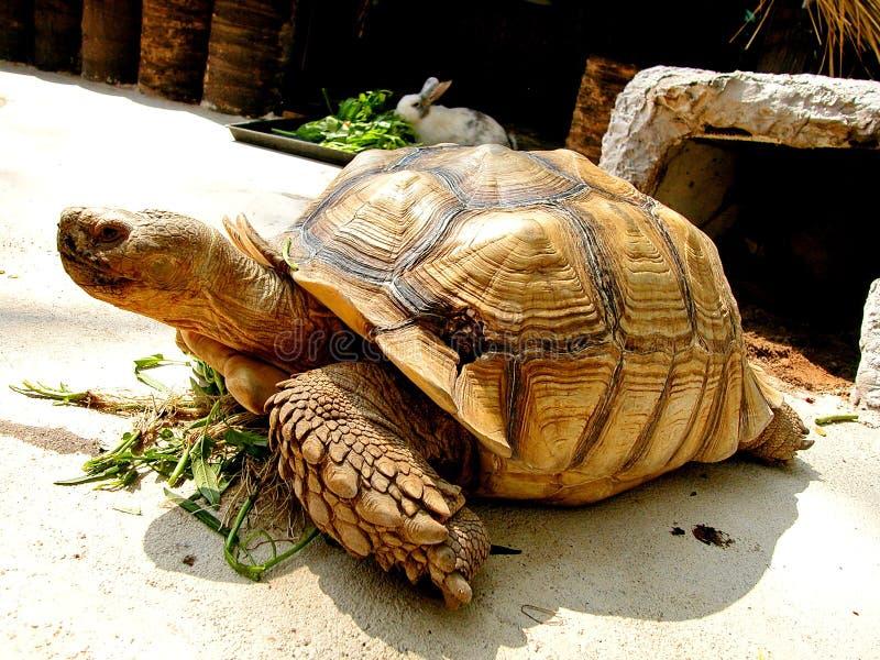 Animal en Tailandia fotos de archivo libres de regalías