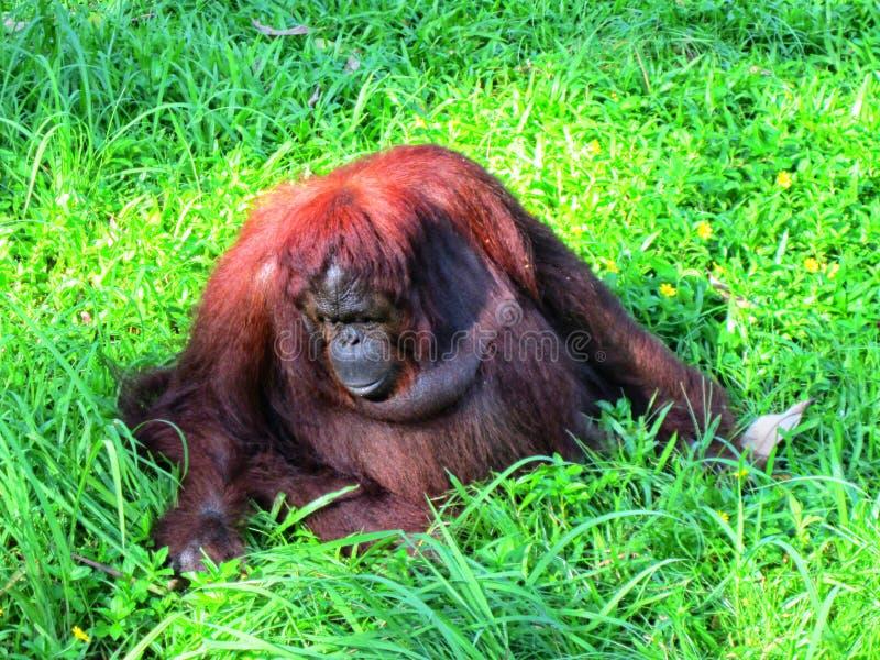 animal en un parque zoológico foto de archivo libre de regalías