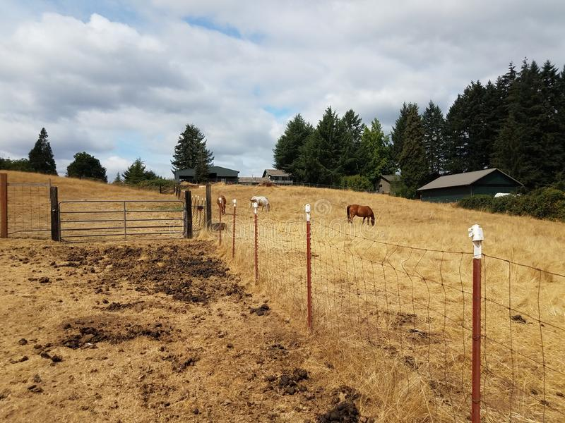 Animal enclosure on farm with horses, dirt, and poop. Animal enclosure on farm with horses, fence, dirt, and poop stock photography