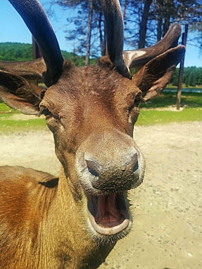Animal engraçado fotografia de stock royalty free
