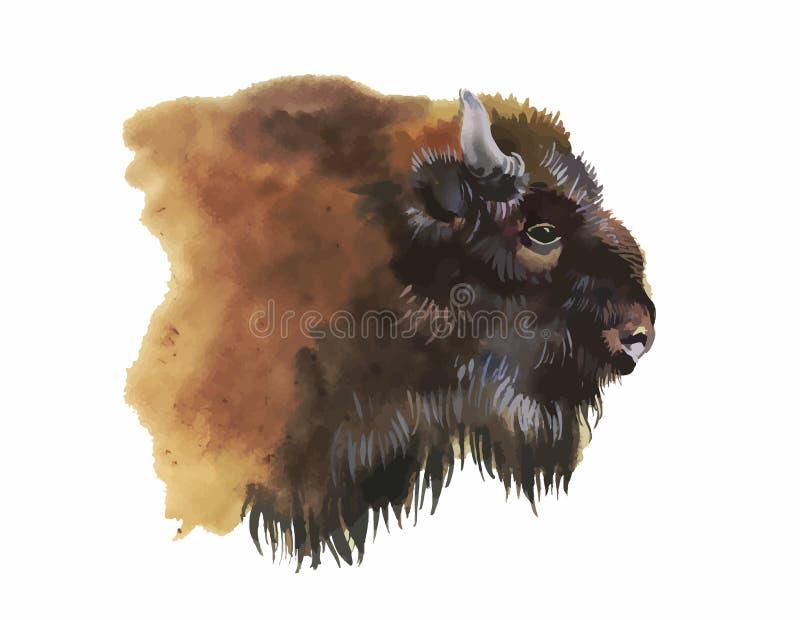 Animal européen de bison d'aquarelle d'isolement sur l'illustration blanche de vecteur de fond illustration de vecteur