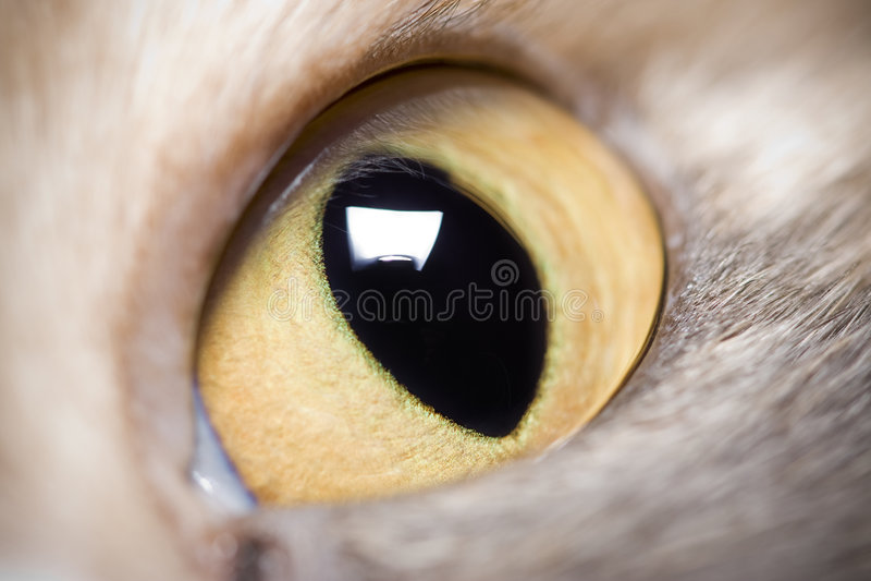 Animal Eye Royalty Free Stock Images