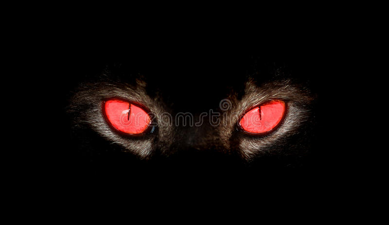 Animal eyes stare at something in black stock photo
