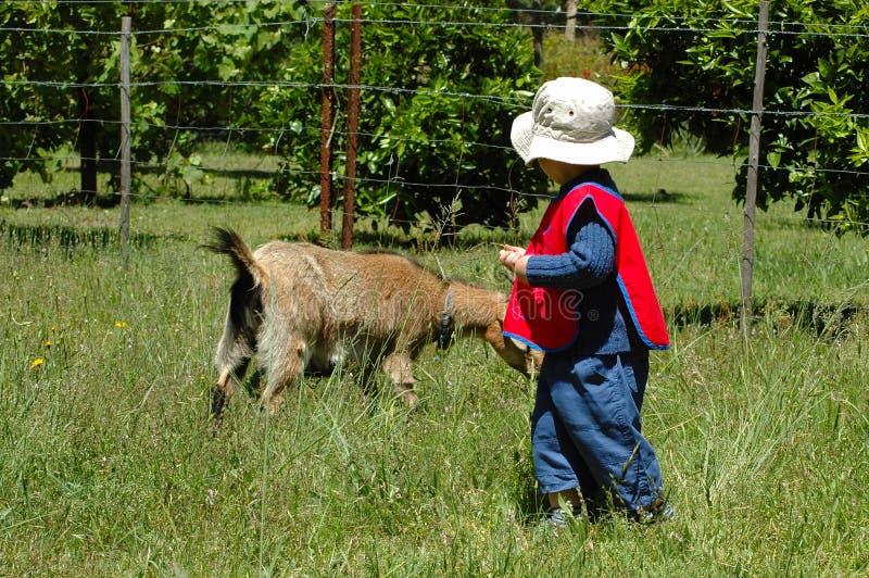Animal familier d'enfant et de chèvre photographie stock